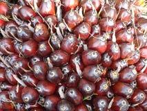 Fruto de óleo da palma Fotos de Stock