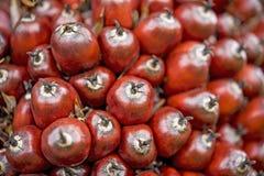 Fruto de óleo da palma, fim acima Fotografia de Stock Royalty Free