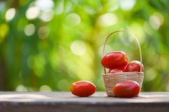 Fruto de baga fresco do tomate na cesta no fundo de madeira e da natureza do verde fotografia de stock royalty free