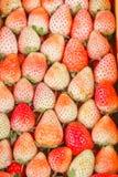 Fruto de baga vermelho da morango Imagens de Stock