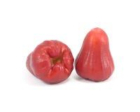 Fruto de Bell Fotografia de Stock