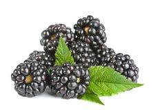 Fruto de Blackberry foto de stock