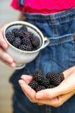 Fruto de Blackberry Imagem de Stock Royalty Free