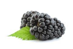 Fruto de Blackberry no branco foto de stock royalty free