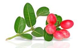 Fruto de Carunda isolado no fundo branco foto de stock royalty free