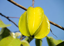fruto de estrela em uma árvore Foto de Stock