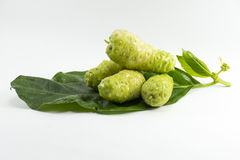 Fruto de Noni isolado no fundo branco Fruto para a saúde e a erva Foto de Stock Royalty Free