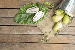 Fruto de Noni no tanque na tabela de madeira Fruto para a saúde e a erva Imagens de Stock