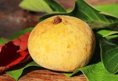 Fruto de Santol Fotografia de Stock