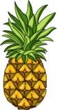 Fruto do abacaxi do verão Ilustração do Vetor