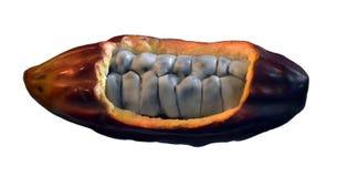 Fruto do cacau isolado no branco Foto de Stock