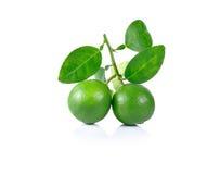 Fruto do cal no fundo branco Foto de Stock Royalty Free