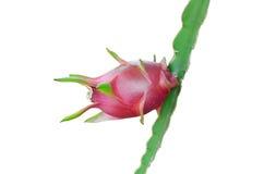 Fruto do dragão isolado no branco Fotos de Stock