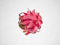 fruto do dragão ou fruto orgânico do dragão no fundo Foto de Stock Royalty Free