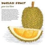 Fruto do Durian Imagens de Stock