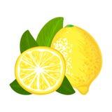 Fruto do limão ilustração do vetor