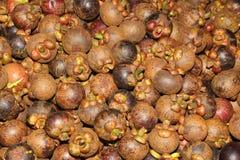 Exposição do mangustão Foto de Stock Royalty Free