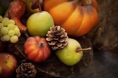 Fruto do outono foto de stock royalty free