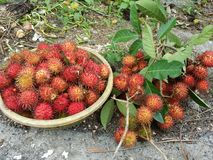 Fruto do Rambutan Fotografia de Stock