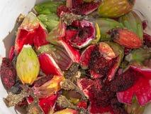 Fruto do Saguaro para processar e colher Fotografia de Stock Royalty Free