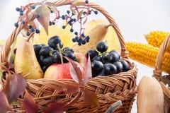 Fruto e abóboras sazonais Imagem de Stock