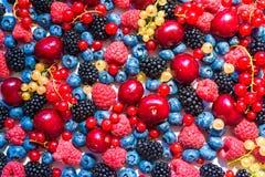 Fruto e bagas do verão 6 tipos de bagas orgânicas cruas do fazendeiro Imagens de Stock Royalty Free