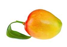 Fruto fresco da manga com as folhas do verde isoladas no fundo branco Imagem de Stock