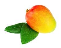 Fruto fresco da manga com as folhas do verde isoladas no fundo branco Fotografia de Stock