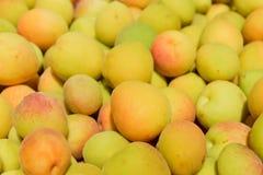 Fruto fresco do abricó fotos de stock royalty free