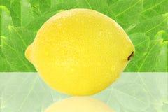 Fruto fresco do limão Fotografia de Stock Royalty Free