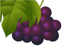 Fruto fresco natural da uva Ilustração Stock
