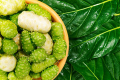 Fruto india Noni da amoreira foto de stock