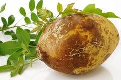Fruto maduro do bael Fotografia de Stock