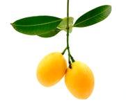 Fruto mariano da ameixa no fundo branco Imagem de Stock Royalty Free