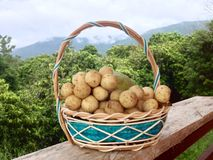 Fruto na vista tropical Fotografia de Stock Royalty Free