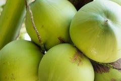 fruto novo do coco na praia e no por do sol do partido Fotografia de Stock