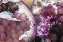 Fruto roxo antioxidante da romã Fotografia de Stock Royalty Free