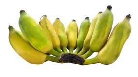 Fruto Semi-maduro das bananas isolado Fotografia de Stock