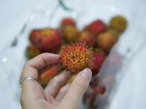 Fruto tropical asiático da baga do Rambutan fotos de stock
