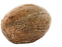 Fruto tropical do coco isolado no fundo branco Fotografia de Stock Royalty Free