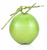 Fruto verde do coco isolado no fundo branco Imagem de Stock Royalty Free
