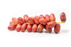 Fruto vermelho fresco da palma de datas no fundo branco Imagem de Stock Royalty Free
