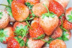Fruto vermelho fresco das morangos Fotografia de Stock Royalty Free