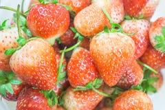 Fruto vermelho fresco das morangos Fotografia de Stock