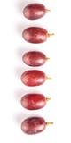 Fruto VI da uva vermelha Fotos de Stock