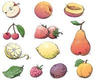 Frutos ilustração stock