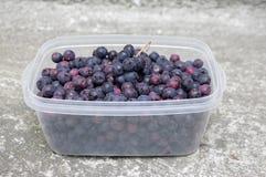 Frutos amadurecidos do amelanchier no fruto plástico branco transparente da caixa, o delicioso e o saudável, pronto para comer imagens de stock