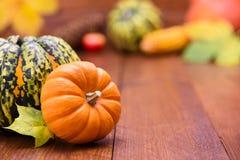 Frutos da abóbora como a decoração e o fundo Imagem de Stock Royalty Free