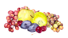 Frutos da aquarela: maçã, uva, cereja, ameixa watercolour Fotografia de Stock Royalty Free