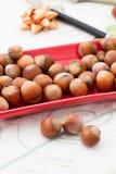 Frutos da avelã Fotografia de Stock